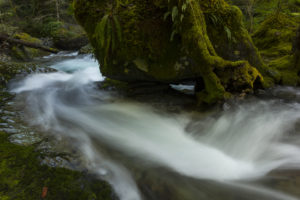 Oregon woods, water flowing around rocks