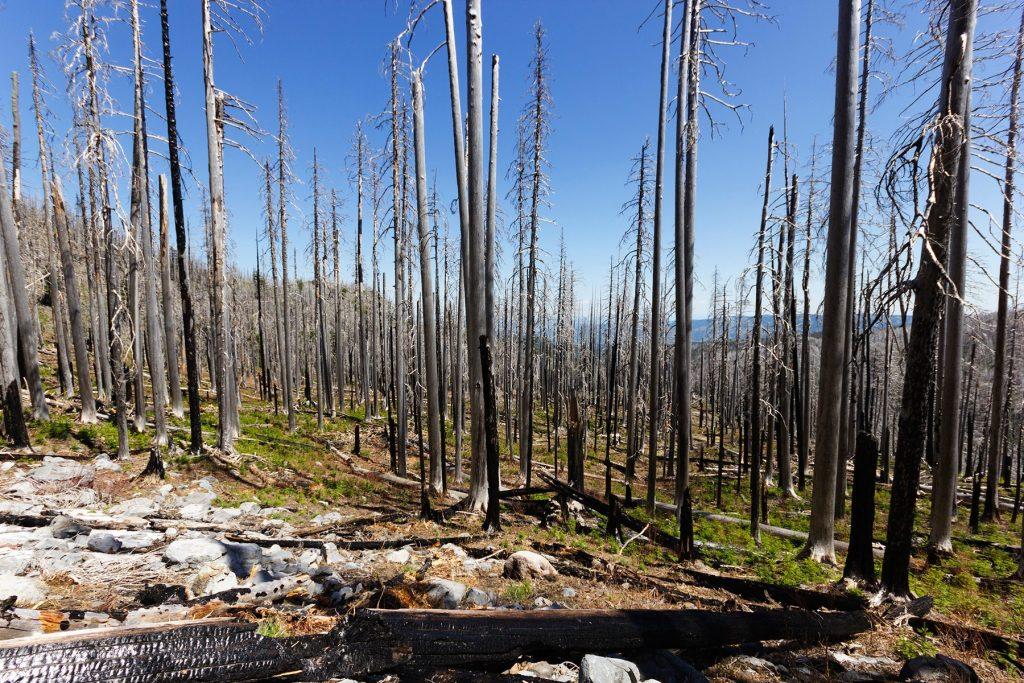 Burnt sticks from Dollar Lake fire