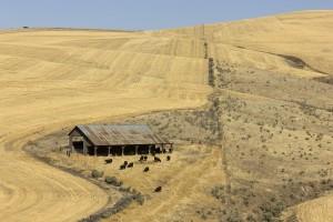 Dufor fields 1