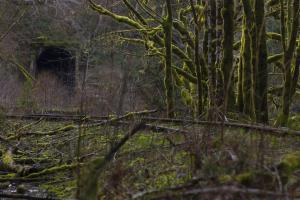 Salmonberry tunnel