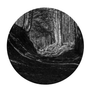 "- ""Path"" (2) Luster 12 x 12"