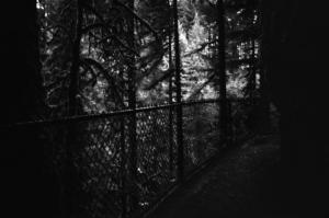 woods fence