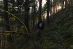 Walking thru the Oregon woods