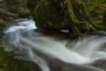 Oregon woods, water flowing around rocks