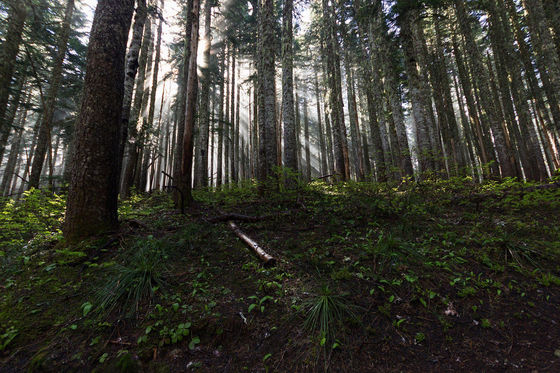 Morning light on the Yocum Ridge Falls - Christopher Lisle