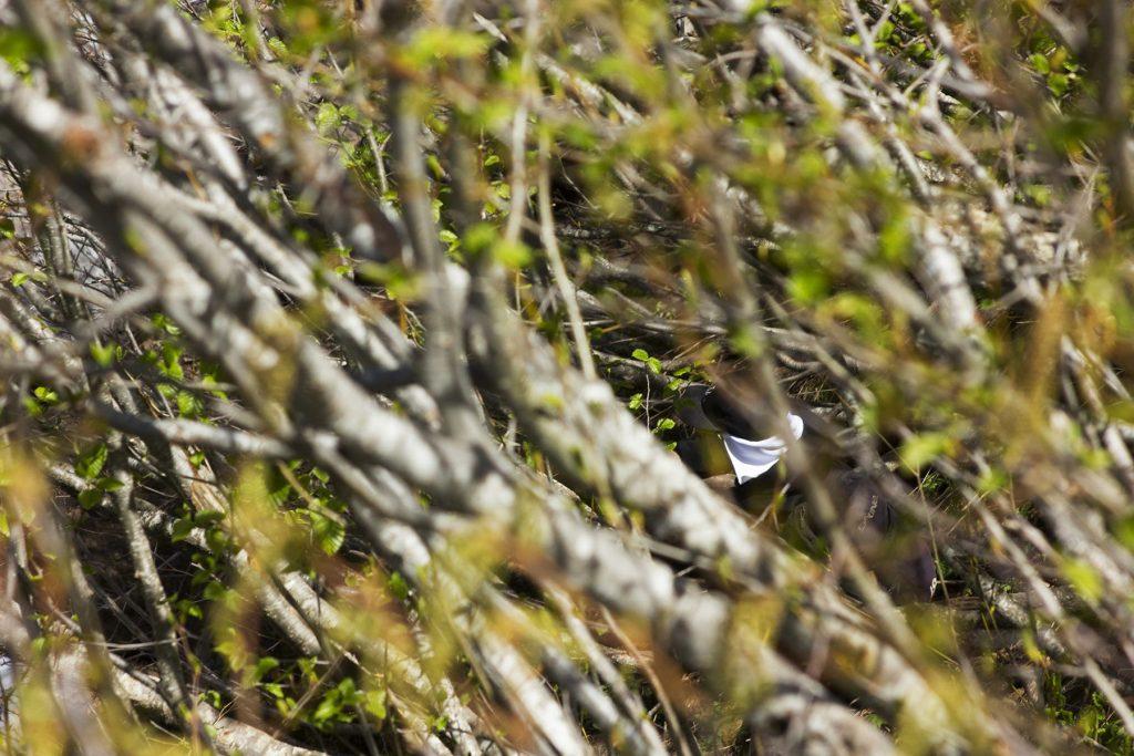 Bushwacking on the Yocum Ridge Falls - Christopher Lisle