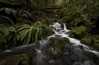 Uphill - Oregon // Christopher Lisle