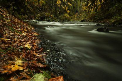 Fall leaves - Oregon // Christopher Lisle
