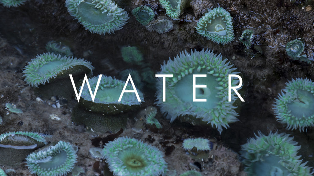 Water by Christopher Lisle