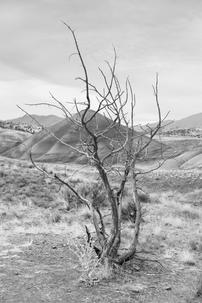 Painted Hills, Oregon | Christopher Lisle 2020