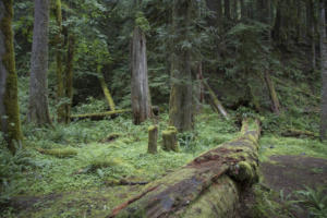woods / ferns / rocks