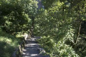 path towards falls