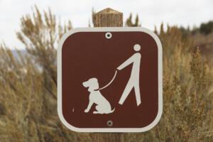 Christopher Lisle, Painted Hills, Oregon – Fall 2020
