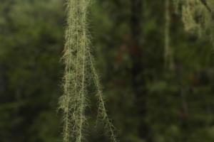 Flora of Mt. Hood in Fall