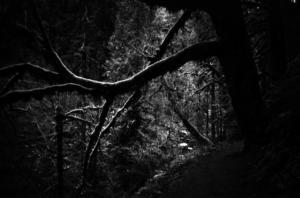 tree lean